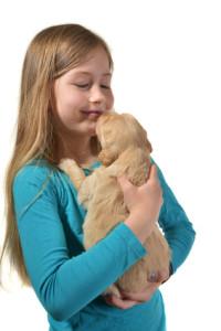Girl holding a golden retriever pup